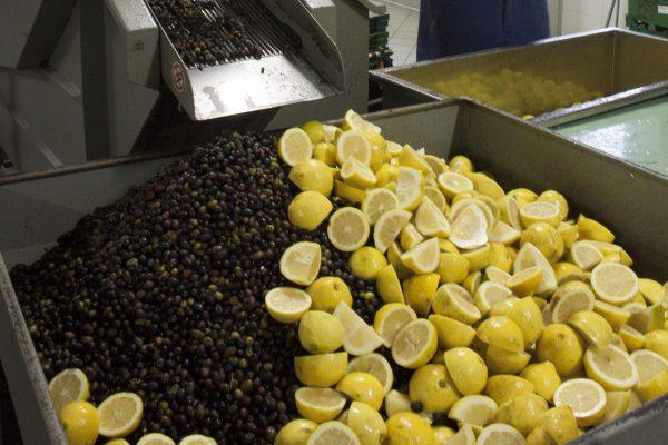 2. Agrumato 2 - taglio limoni