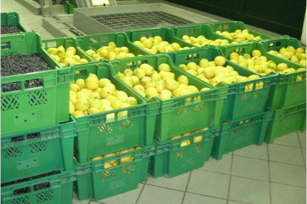 2. Agrumato 4 Olive e limoni