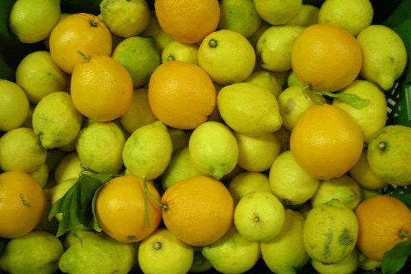 4. Marmellate 3 Limoni e aranci