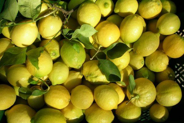4. Marmellate 6 limoni appena colti