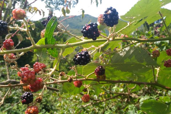 6. Frutti di Tignale 7 - more