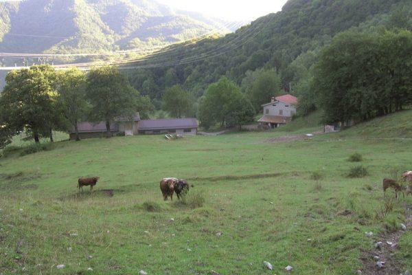 Azienda 3 - malga Angoi2