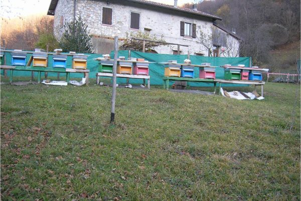 Azienda 7 apiari